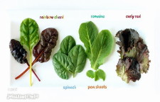 Green Leafy Salad with Dip Dip